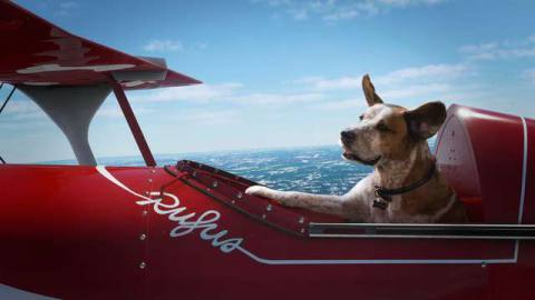 Rufus flies a plane in Microsoft holiday ad